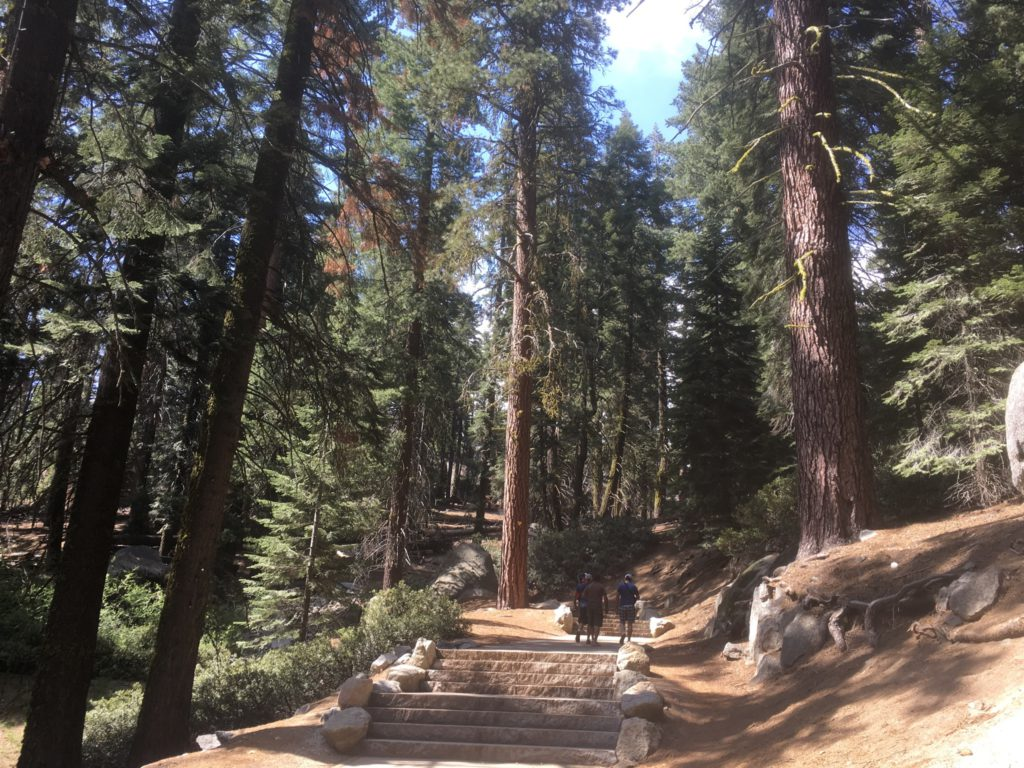 General Sherman Tree Wanderweg