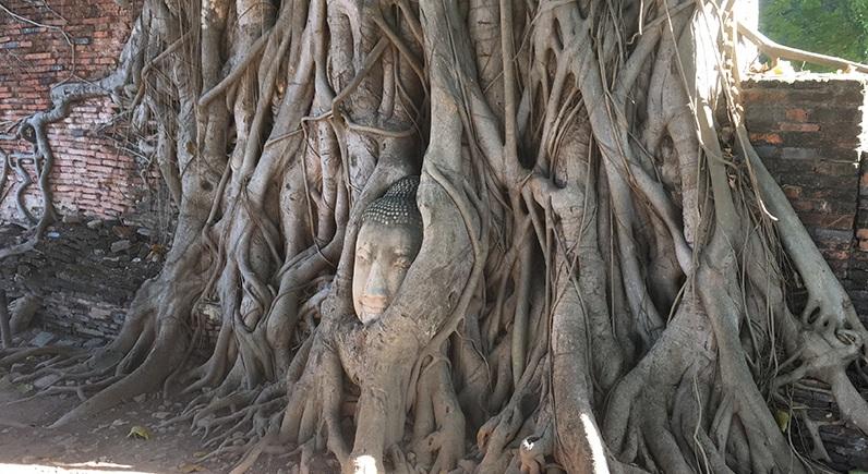 Ayutthaya - Buddha im Baum