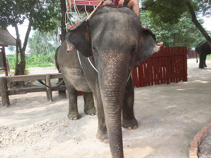 Elefant in Bangkok - Elefantenfarm
