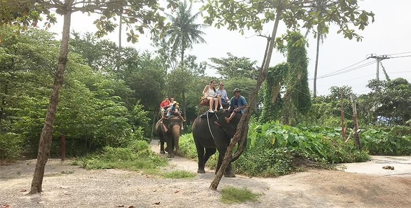 Elefanten reiten in Thailand