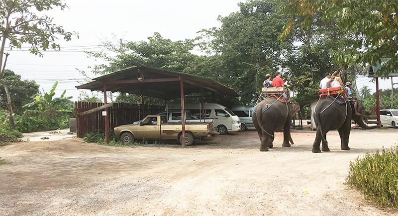 Elefantenfarm in Bangkok