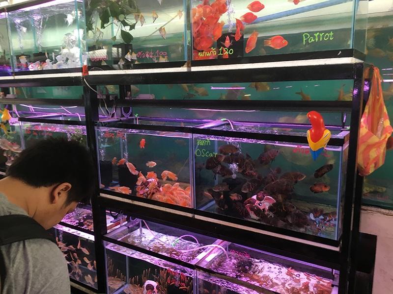 Fischmarkt - Chatuchak Weekend Market