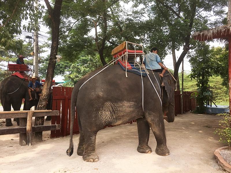 Elefantenreiten in Bangkok (Thailand)