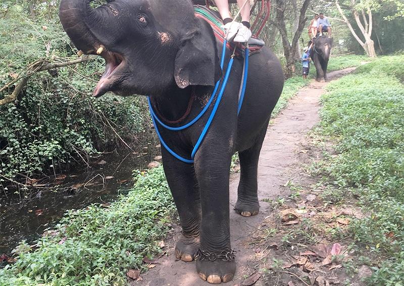 Elefanten in Thailand - Tierquälerei ?