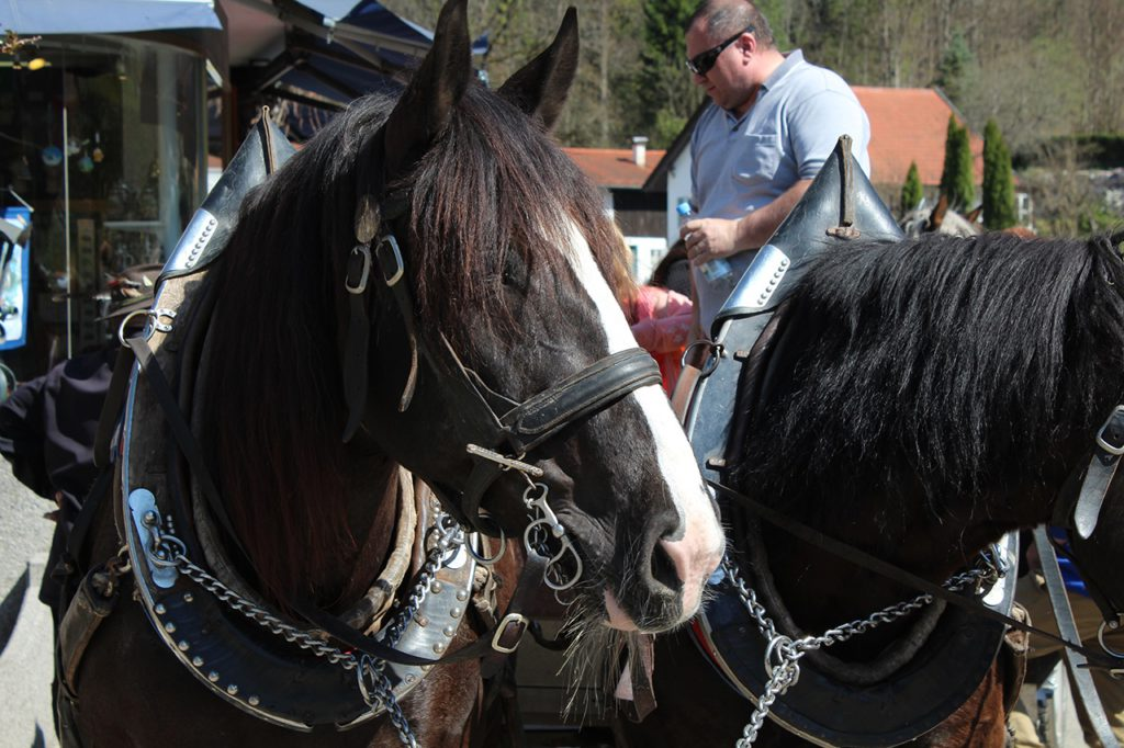 Schloß Neuschwanstein - Pferdekutsche