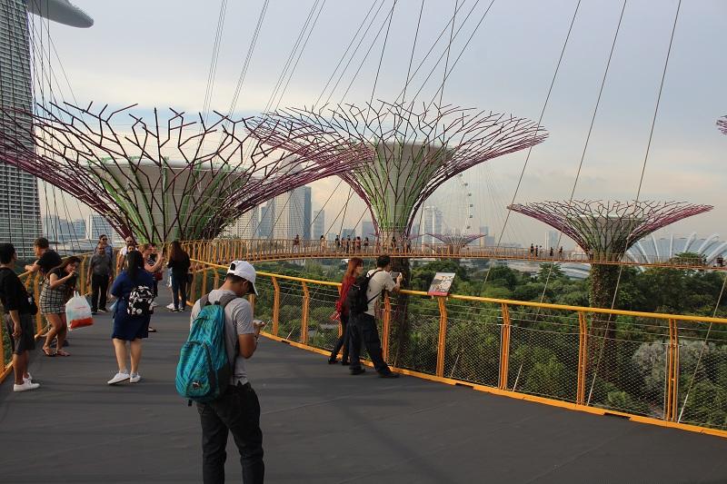 Supertrees in Singapur - Aussichtsplattform