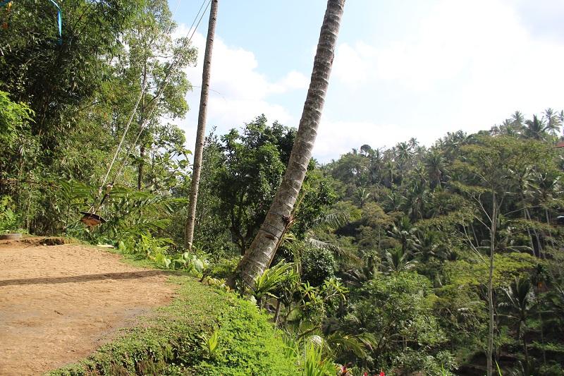 Bali Reisfelder - Die Schaukel