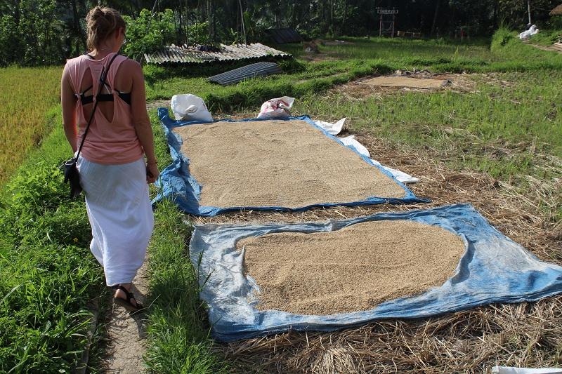 Reis in Ubud