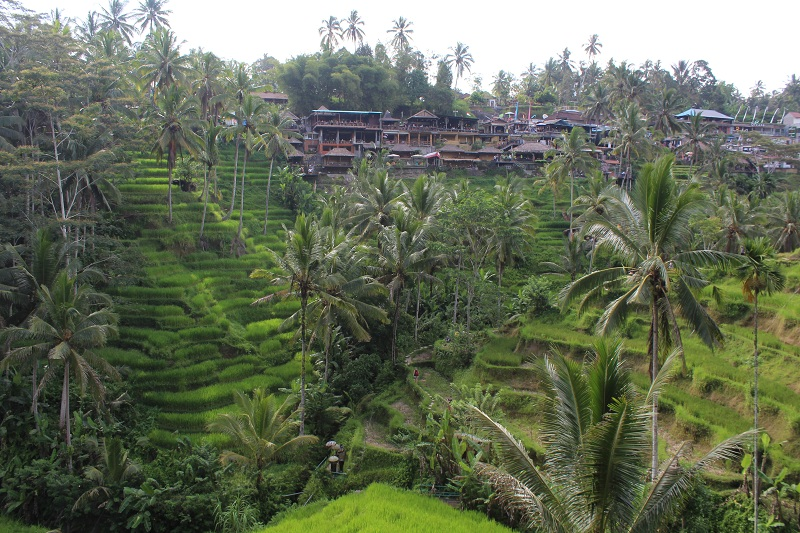 Reisterrassen und Restaurants