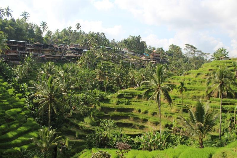 Reisterrassen von Ubud