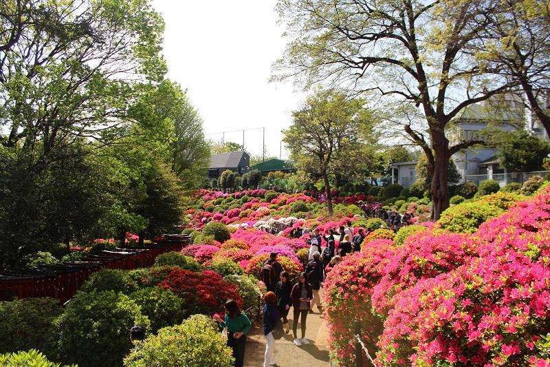Azaleenen Garten