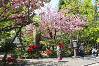 Hanami - Kirschblütenfest in Tokio