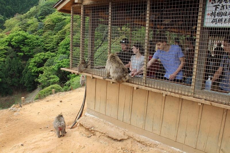 Affenpark Iwata