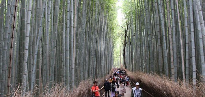 Bambuswald Arashiyama