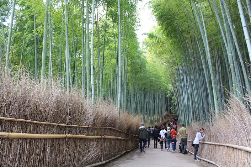 Bambuswald - Es geht los