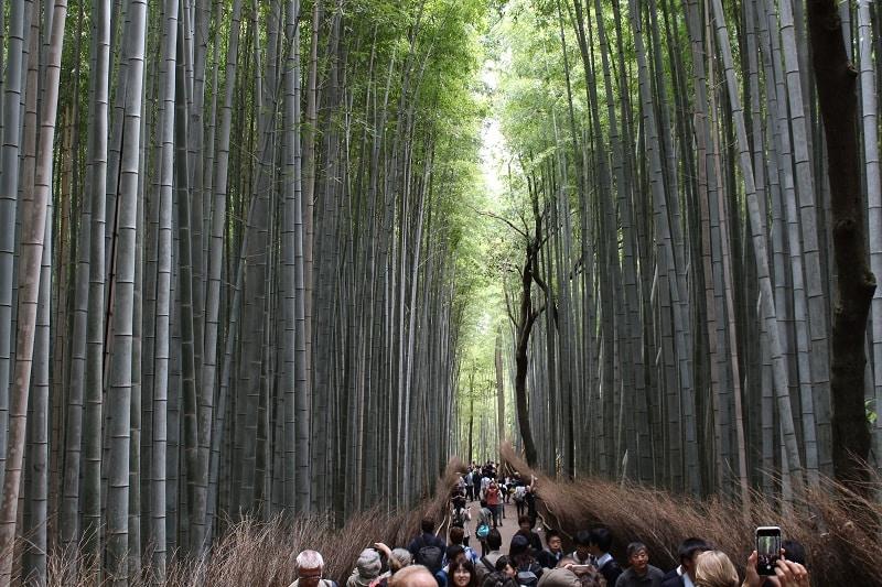Gigantischer Bambuswald in Kyoto
