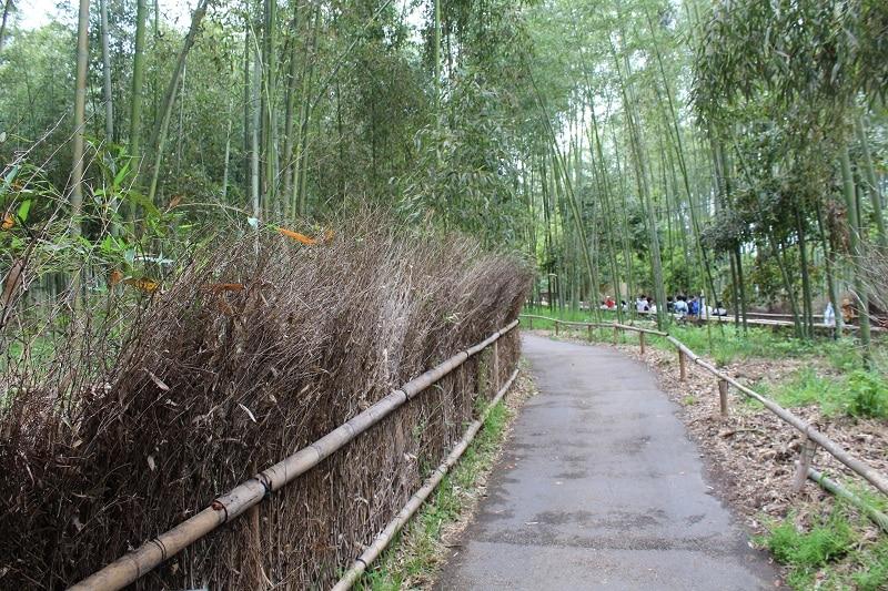 Kein Bambuswald - Wir suchen