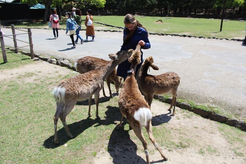 Hirsche füttern im Nara Park